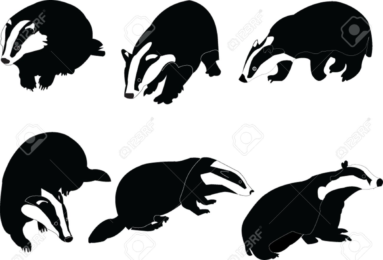 badgers collection Stock Vector - 6139036