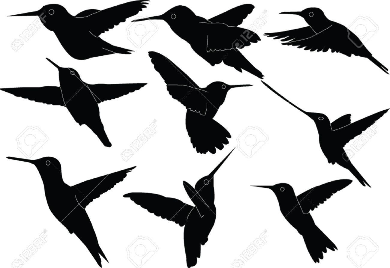 humming bird stock photos u0026 pictures royalty free humming bird