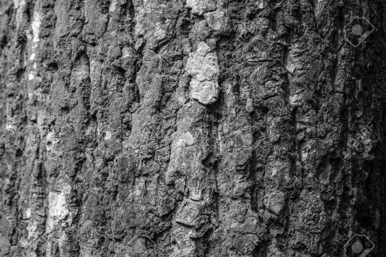 Legno Bianco E Nero : Immagini stock fondo di superficie di legno in bianco e nero di