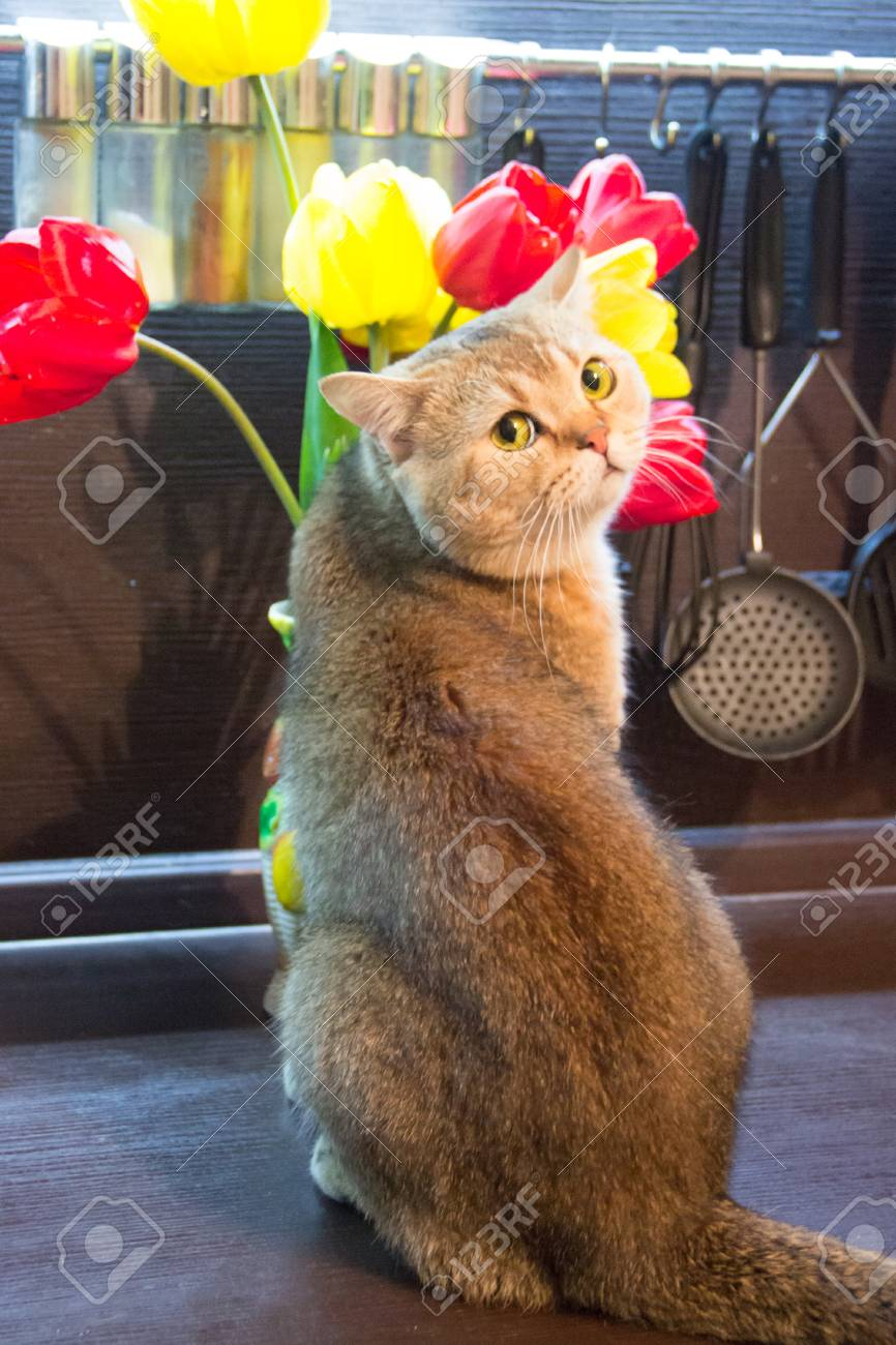 Cat In The Kitchen On The Background Of Multi Colored Tulips