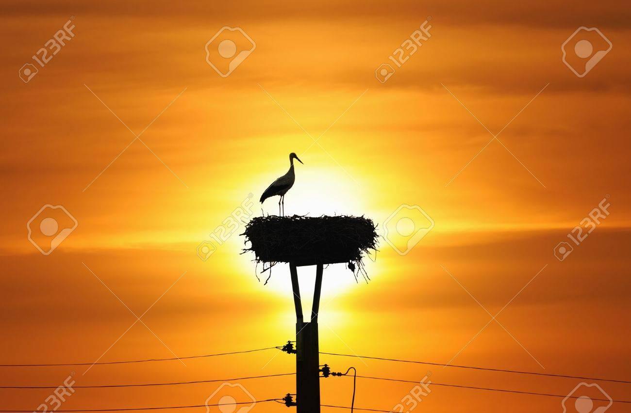 Silhouette of stork in the nest in sunset Standard-Bild - 6355903