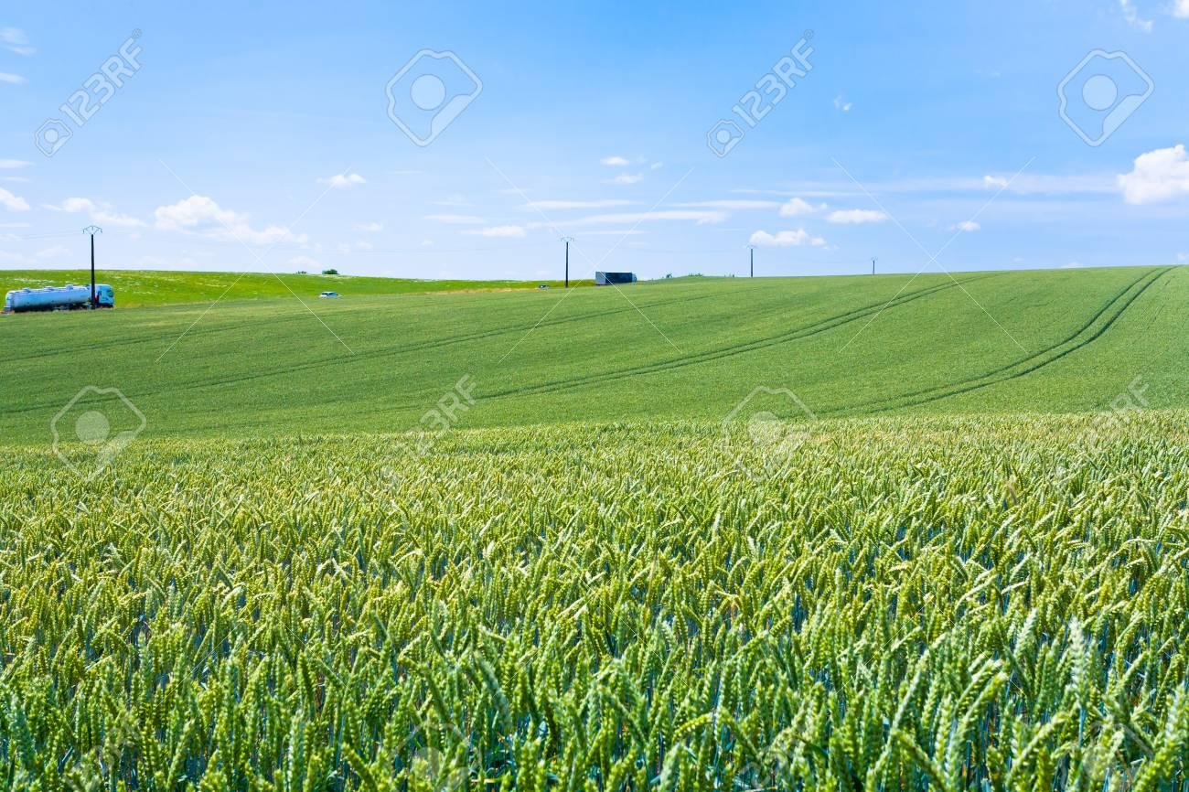 green wheat field under blue sky in France Stock Photo - 14005560