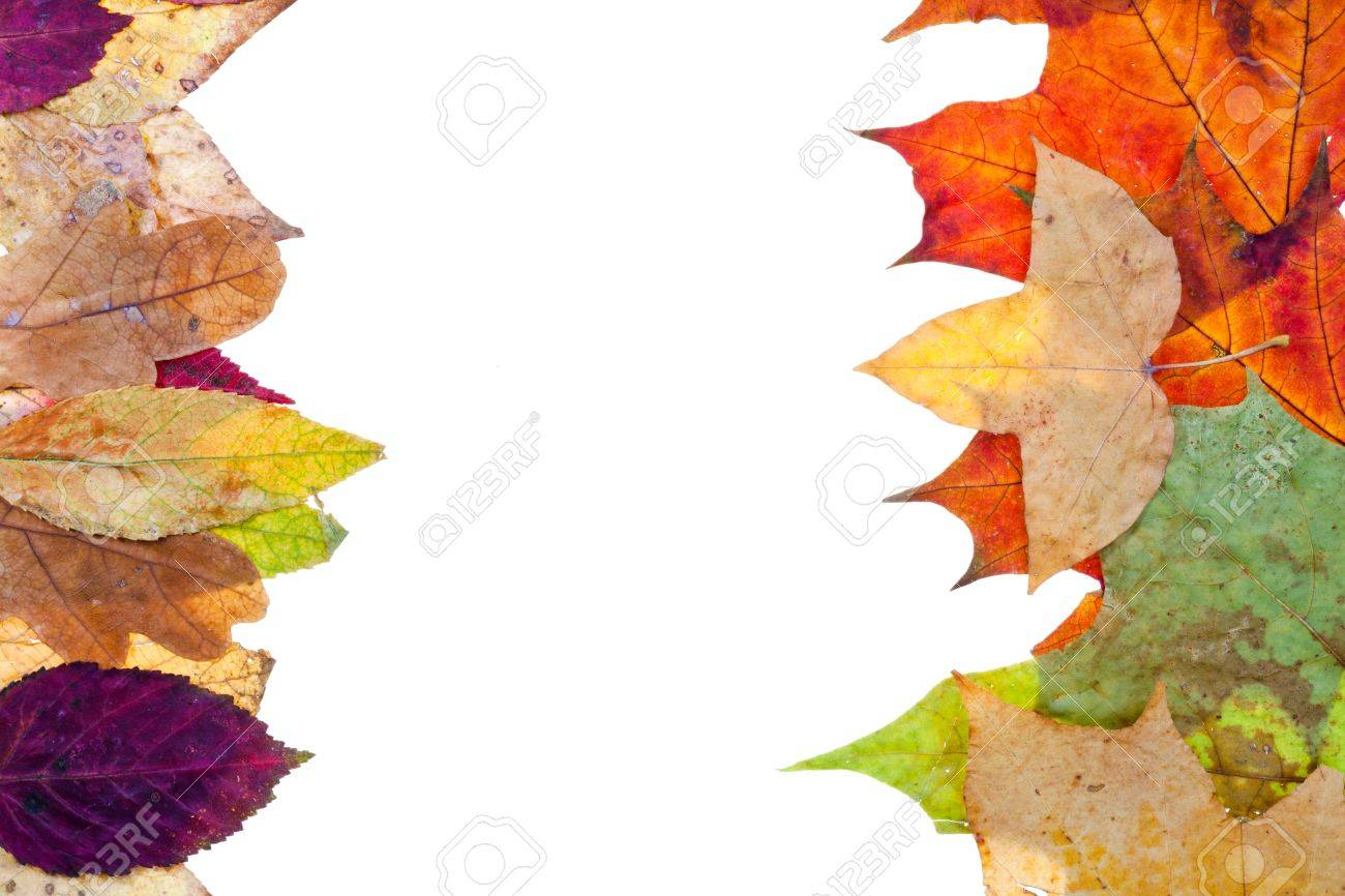 Two Side Natural Frame From Autumn Leaves Isolated On White ...