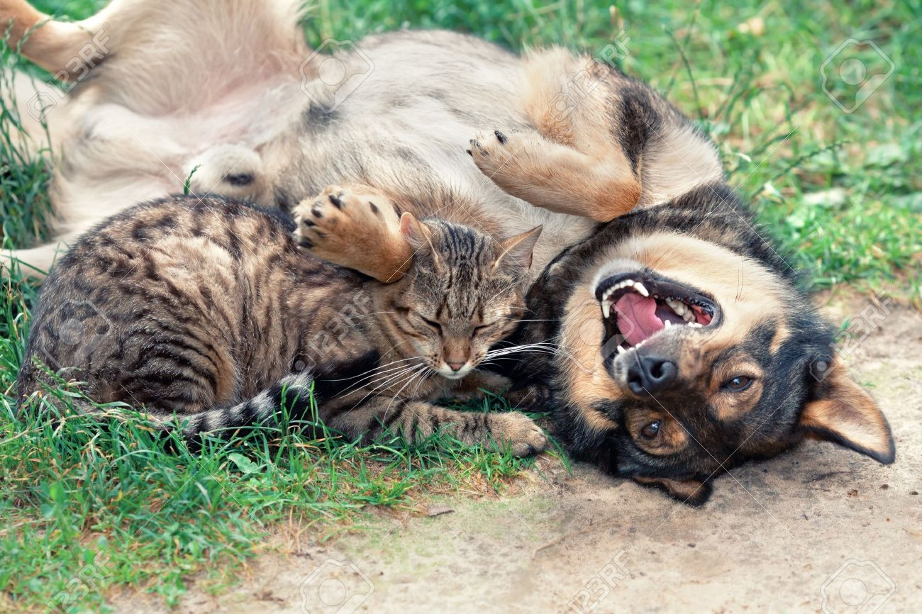 cat playing with dog