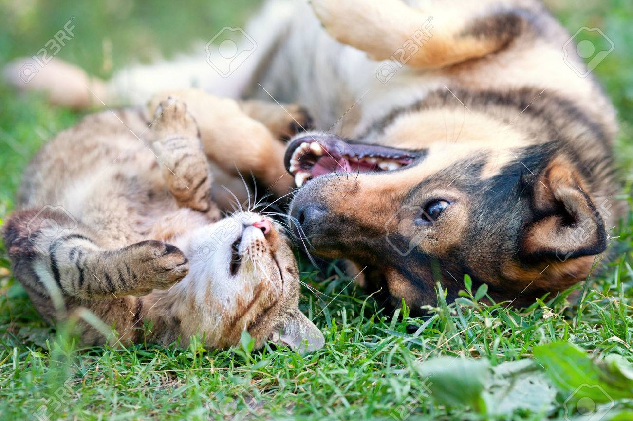Dog And Cat Playing Together Outdoor Stock Photo Picture And
