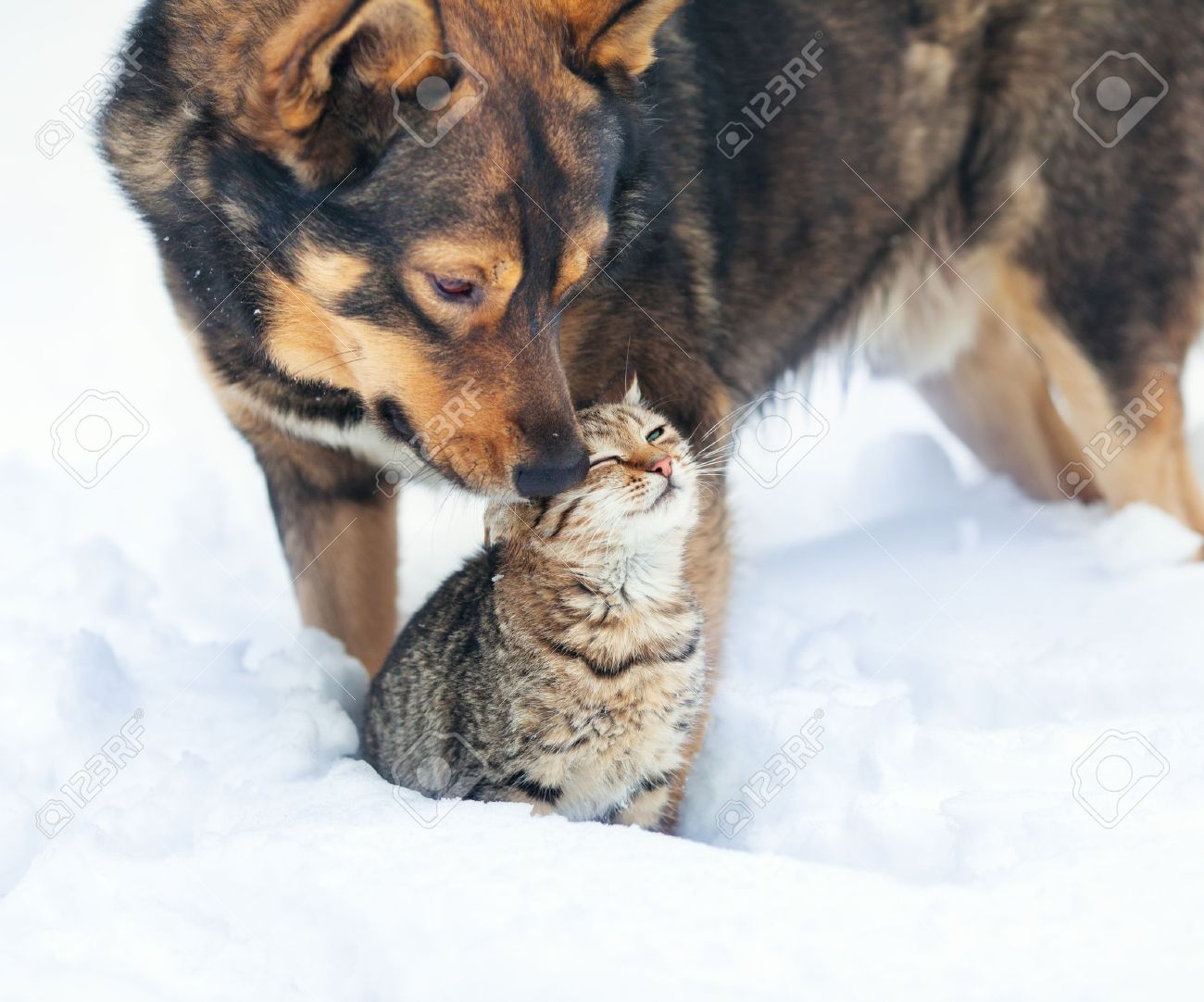 Dog And Cat Playing Together Outdoor In The Snow Stock Photo