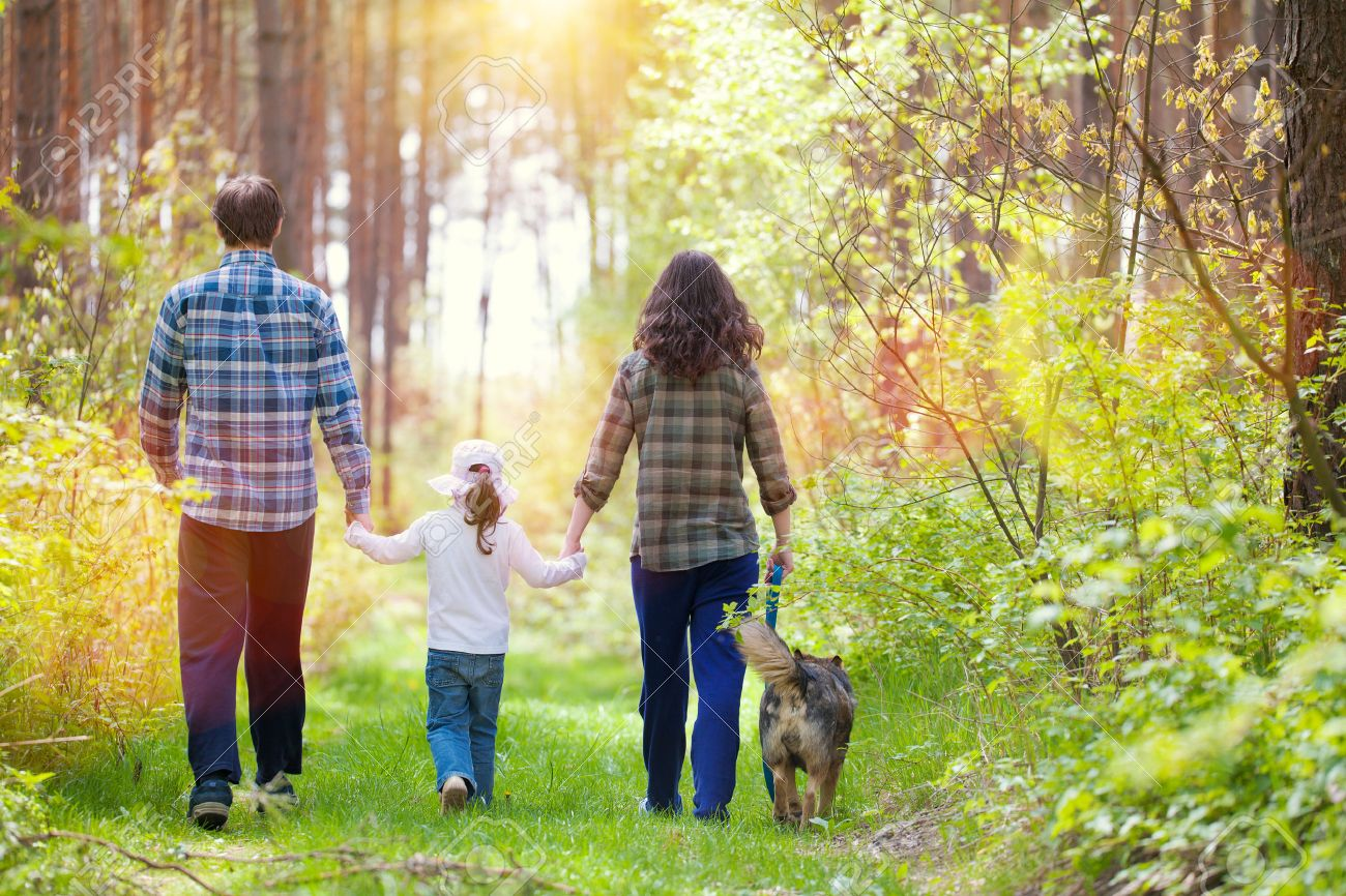 Family with dog walking in the forest back to camera stock photo 28600400