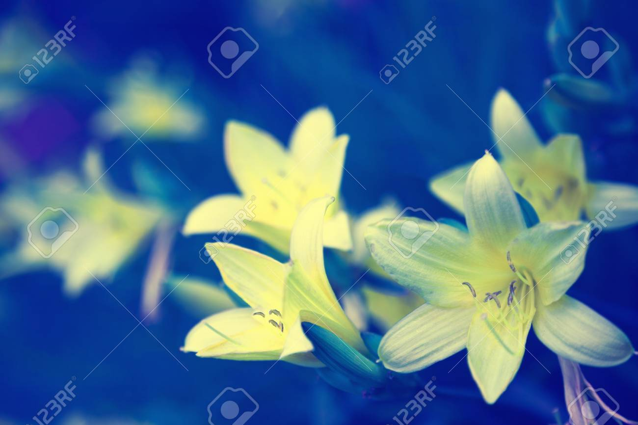 Vintage wild lily flowers natural background stock photo picture stock photo vintage wild lily flowers natural background izmirmasajfo