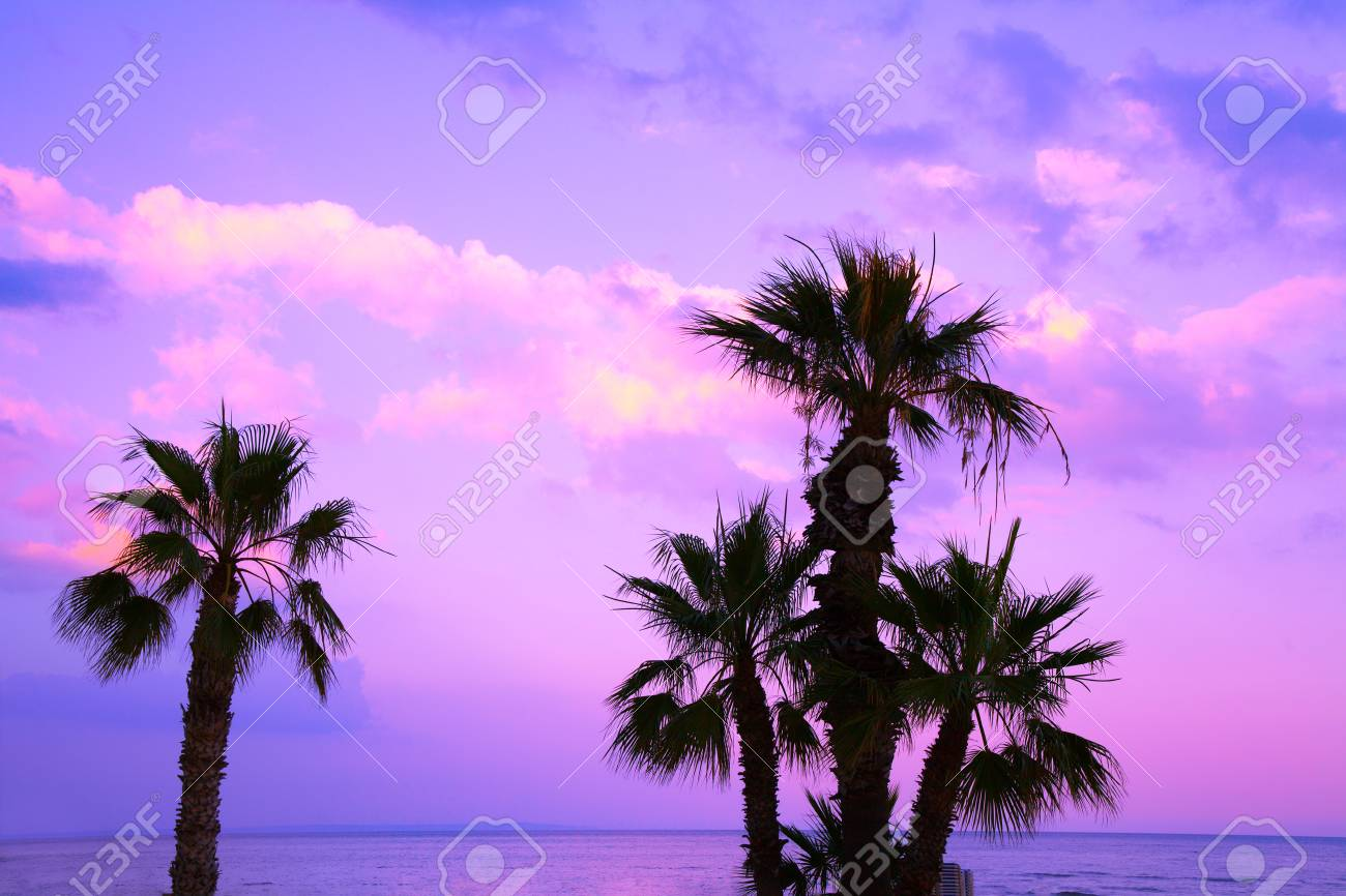 Palm Trees Against A Purple Sunset Sky Tropical Evening Landscape Stock Photo Picture And Royalty Free Image Image 87326804