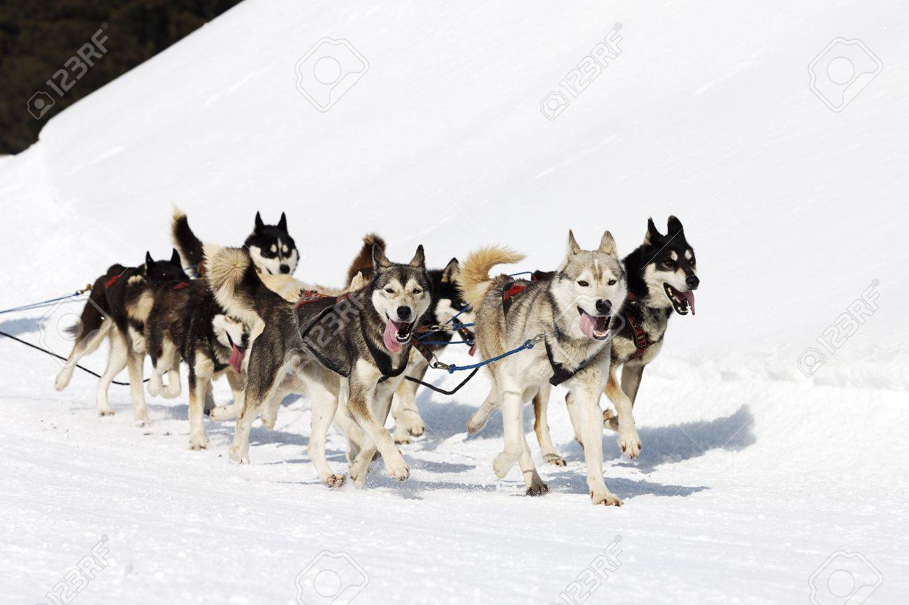 sled stock photos royalty free sled images and pictures