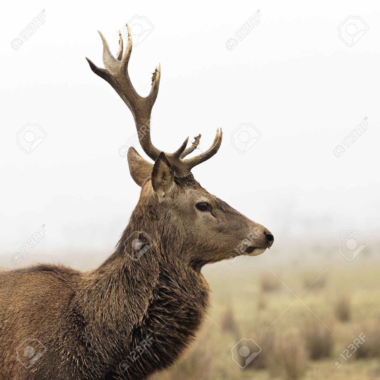 wild deer in forest with morning fog in winter Stock Photo - 12042502