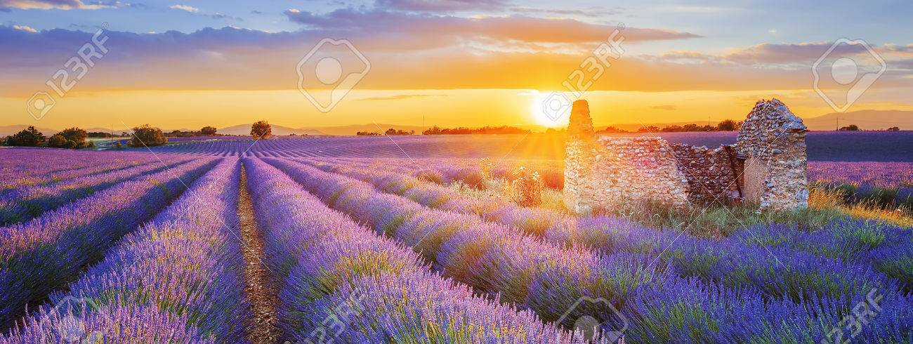 Sun is setting over a beautiful purple lavender filed in Valensole. Provence, France - 78078944