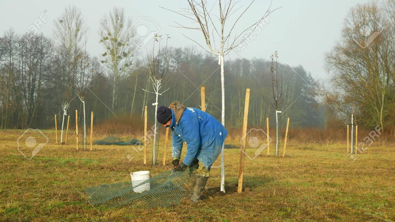 Olomouc Czech Republic December 15 2019 Planting Fruit Trees Stock Photo Picture And Royalty Free Image Image 137513037