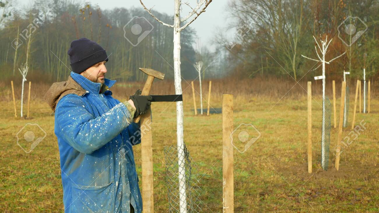 Olomouc Czech Republic December 15 2019 Planting Fruit Trees Stock Photo Picture And Royalty Free Image Image 137513068