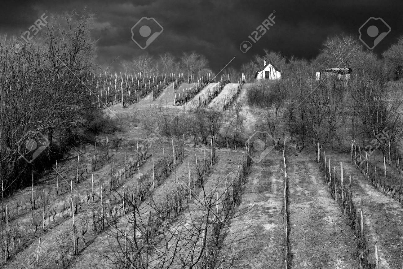 Stock photo vineyard black and white photography