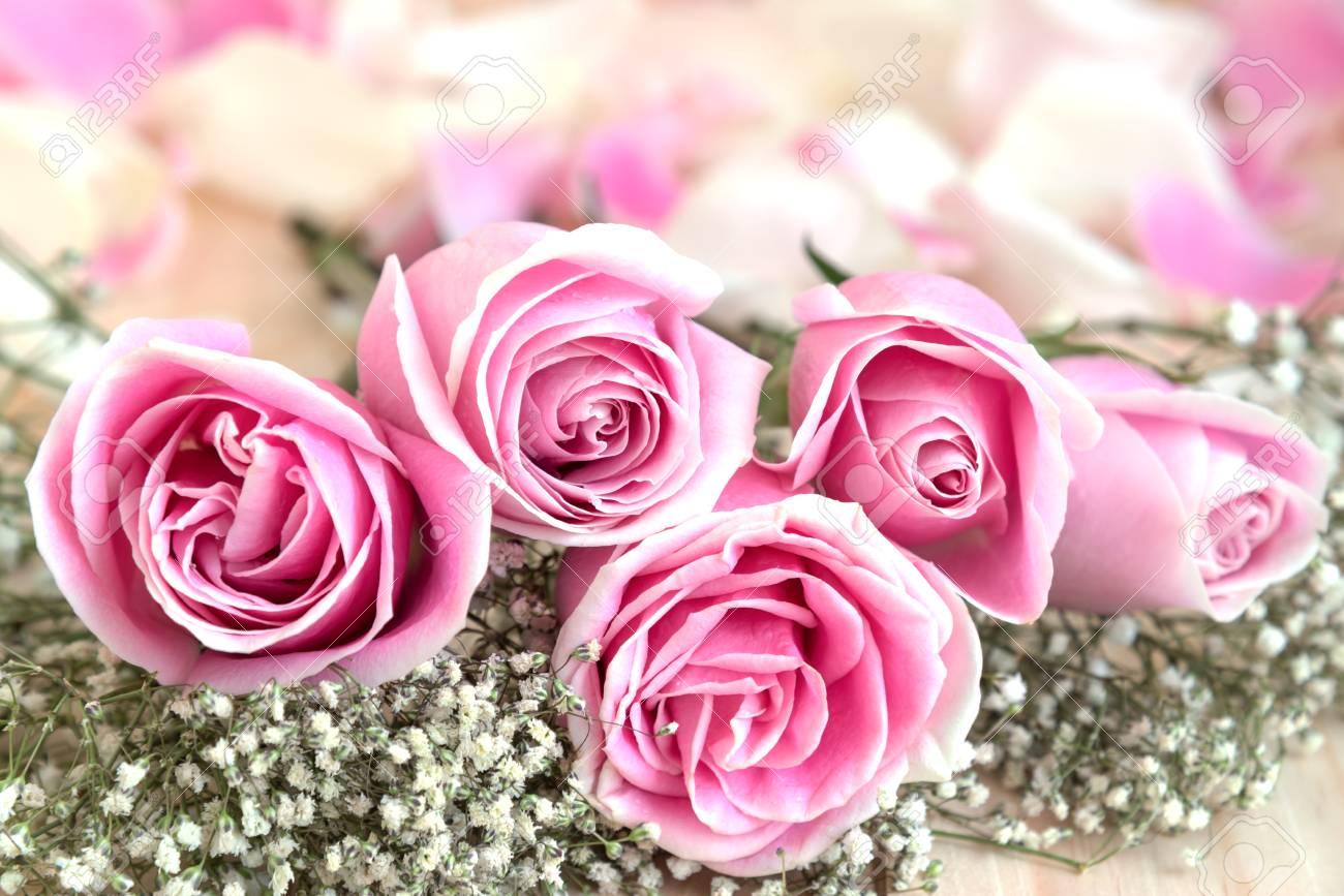 Roses Roses Et Petales D Amour Avec Copie Espace Belle Fleur Le