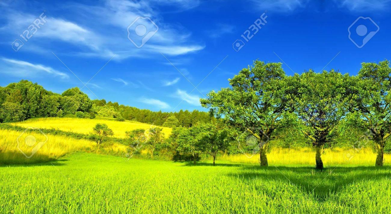 Summer landscape - 6151458