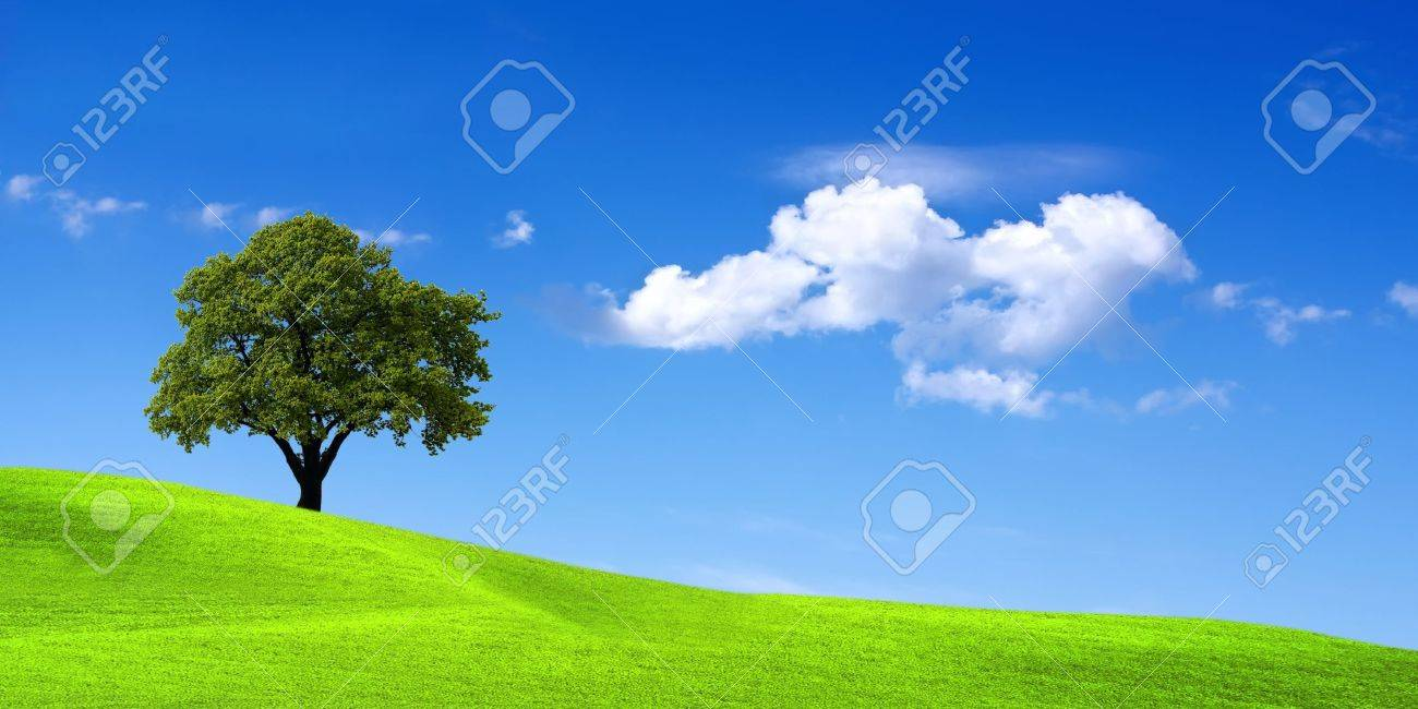 Green landscape Stock Photo - 6960727