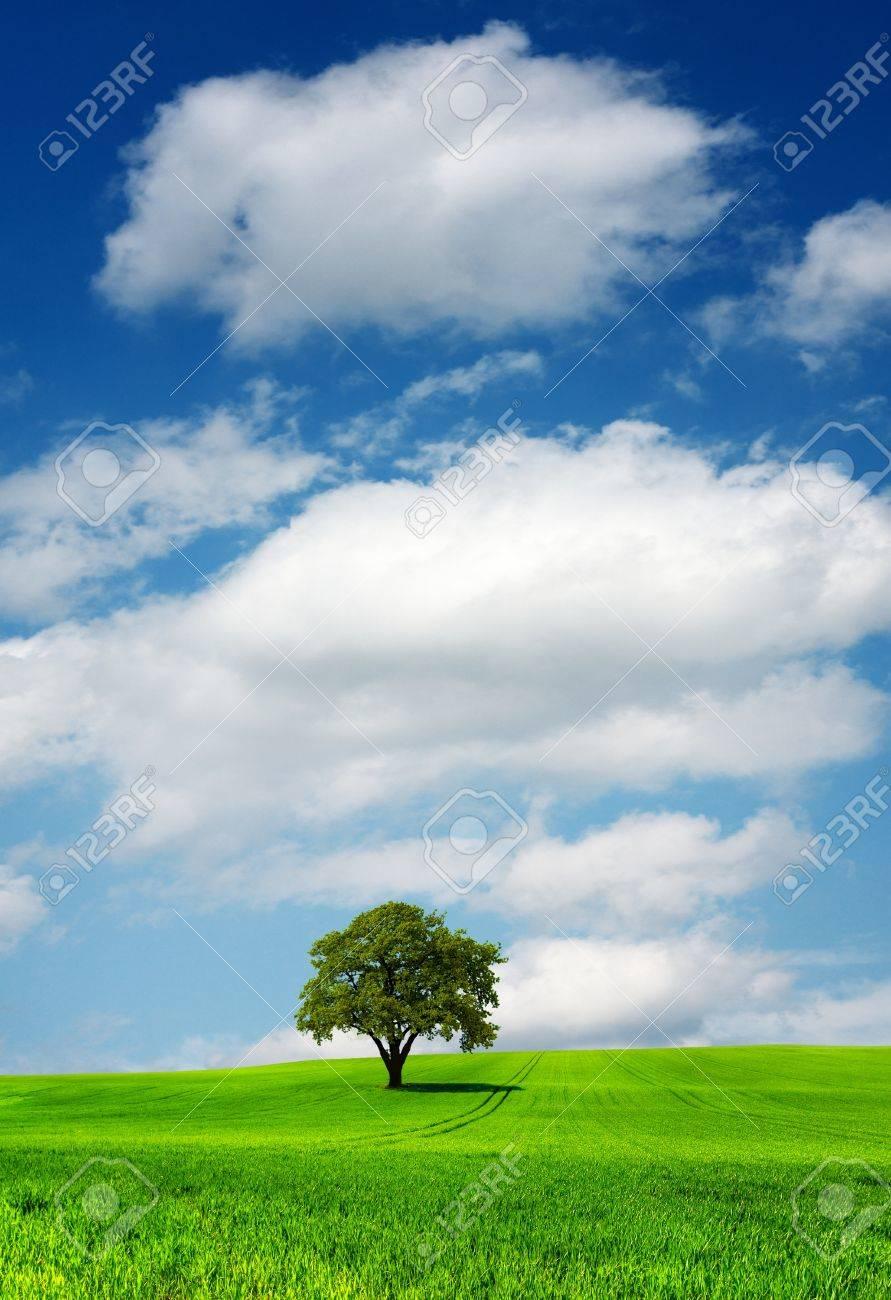 Tree on green field Stock Photo - 8374020