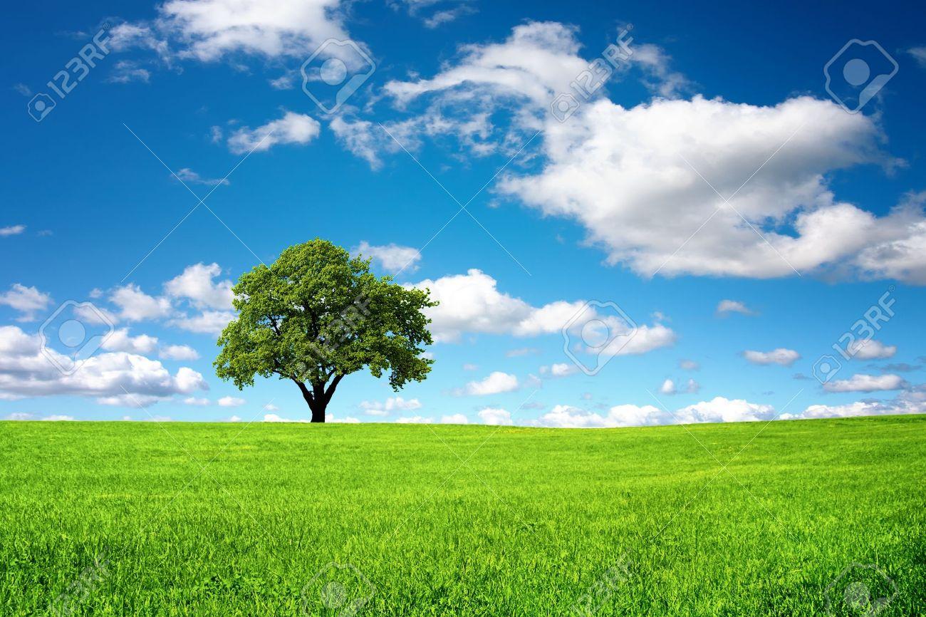 Картинки про природу без фона