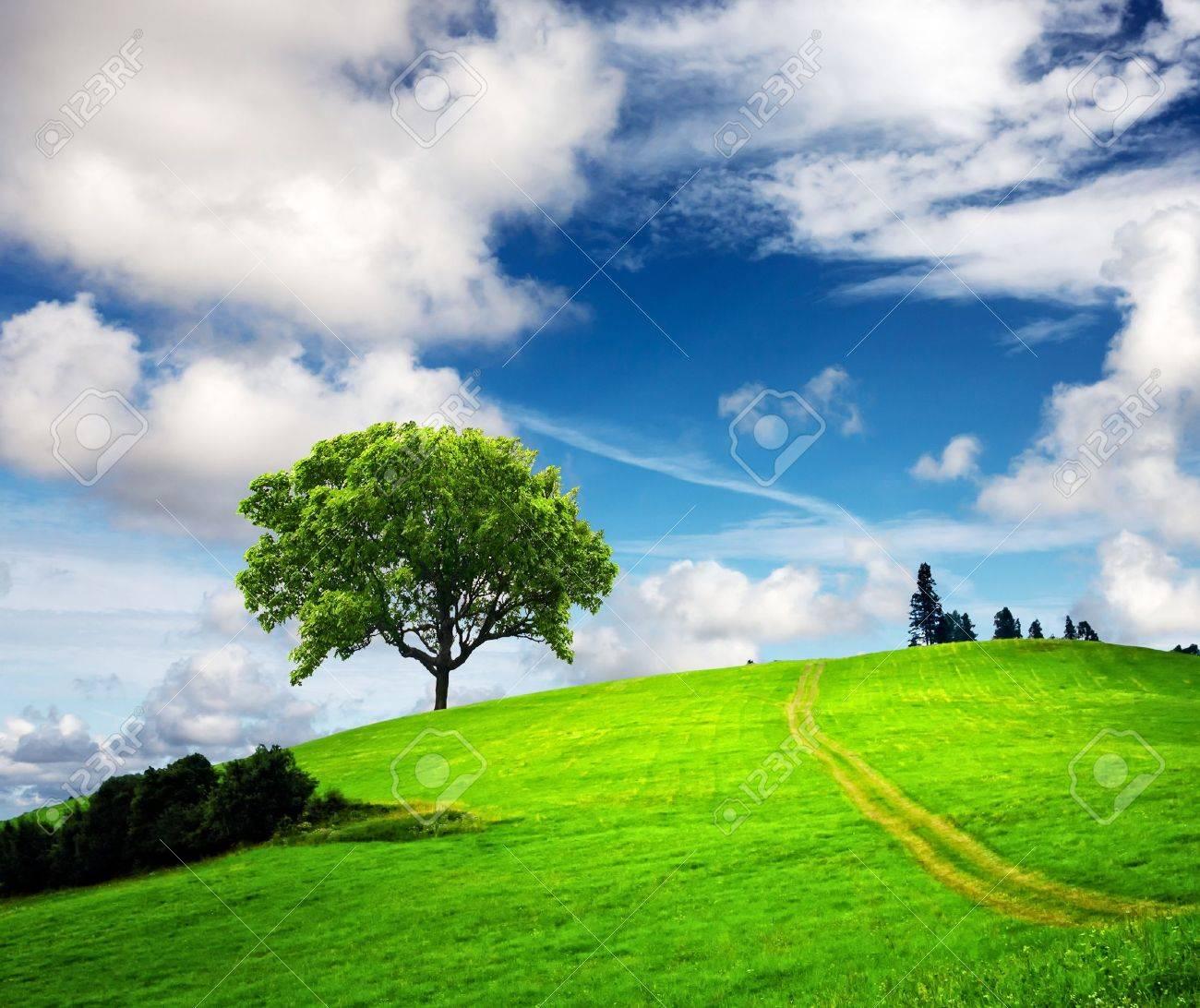 Mountain spring landscape - 8967829