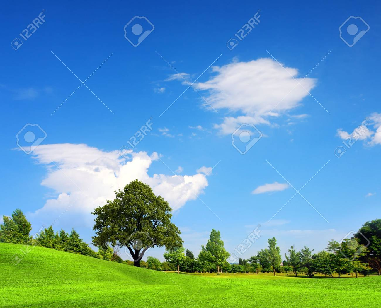 Green field, springtime Stock Photo - 9124670
