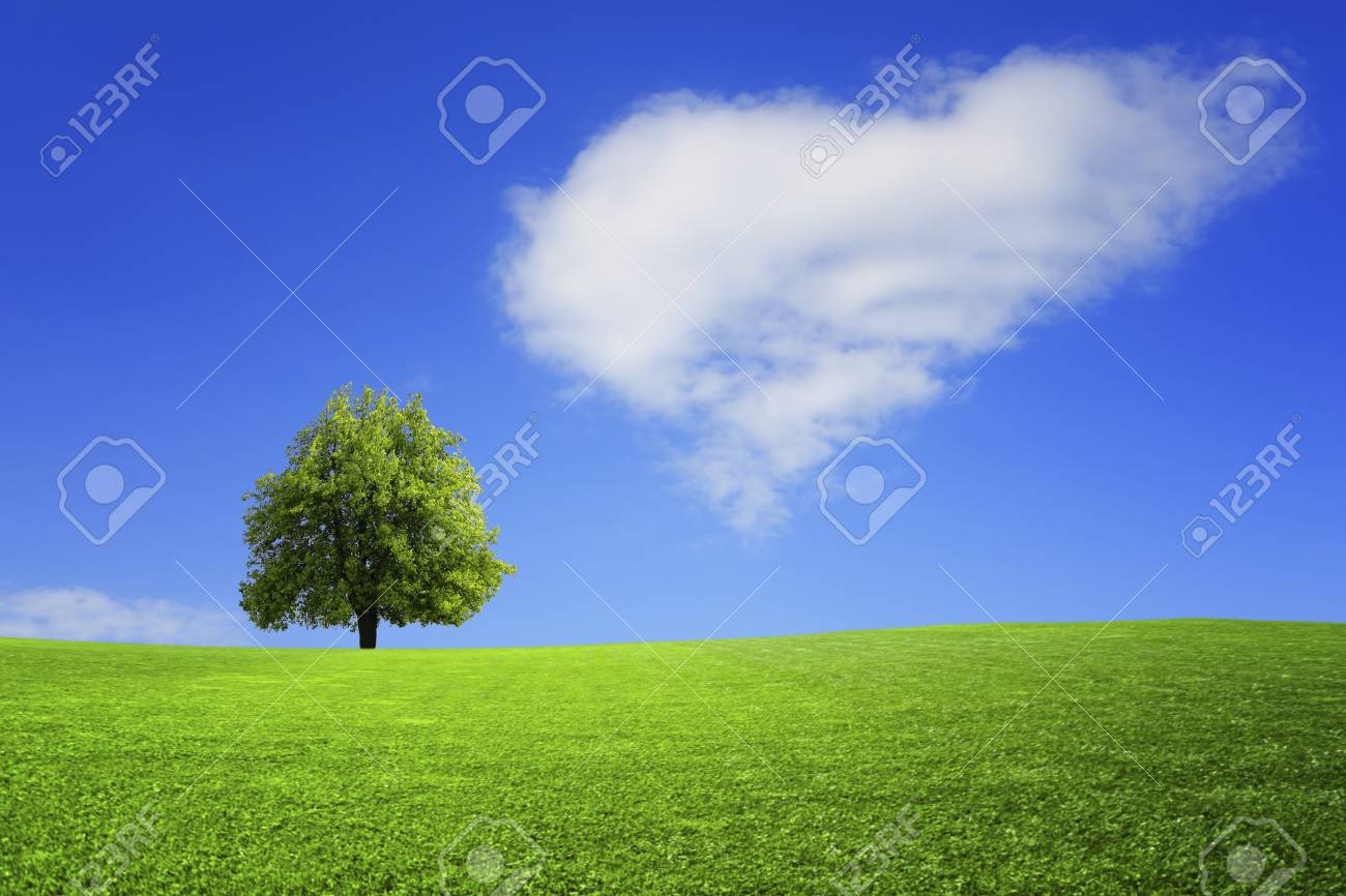 Lonely tree on the field - 125735374