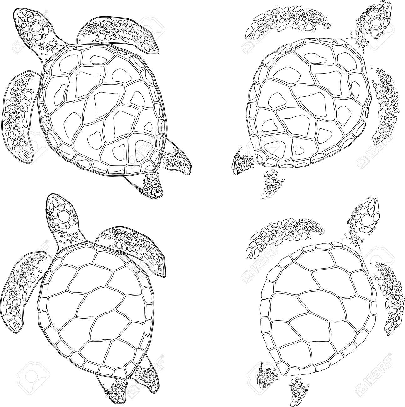 Großartig Schildkröten Zu Färben Fotos - Entry Level Resume Vorlagen ...