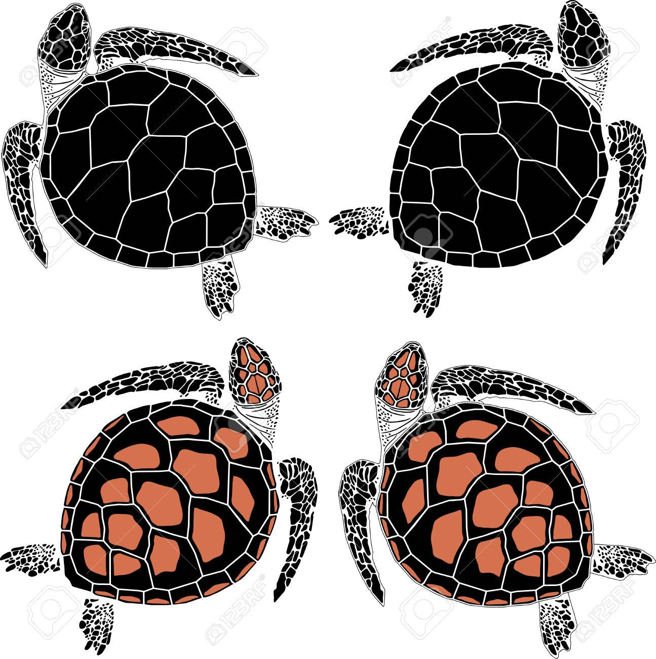 Set Von Vier Schildkröten In Verschiedenen Färbung Und Zeichnung ...