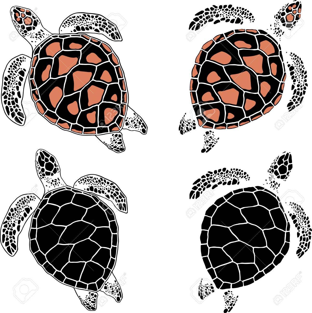 Satz Von Vier Schildkröten In Verschiedenen Färbung Und Zeichnung ...