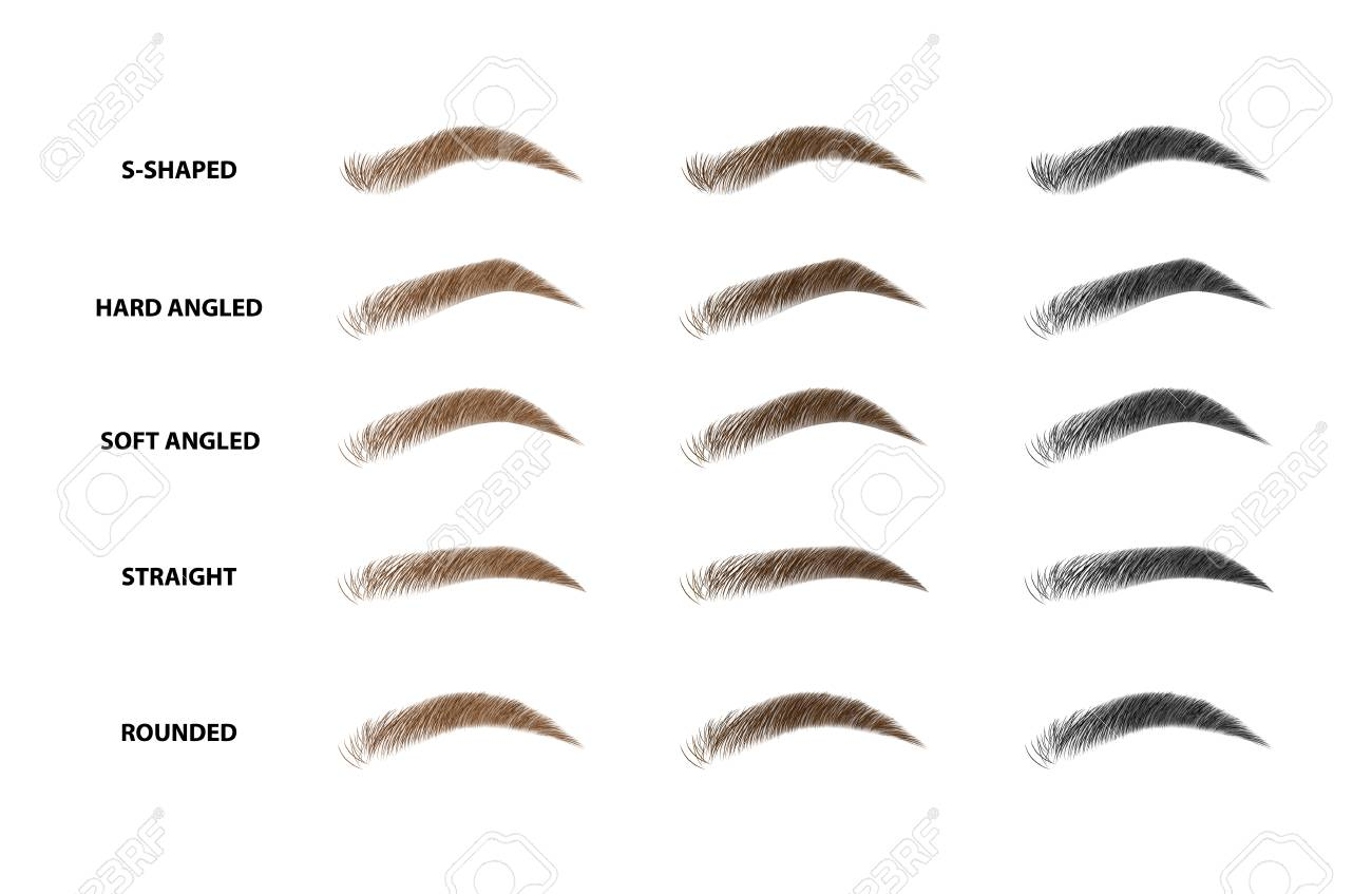 Types of eyebrows vector illustration - 100924432