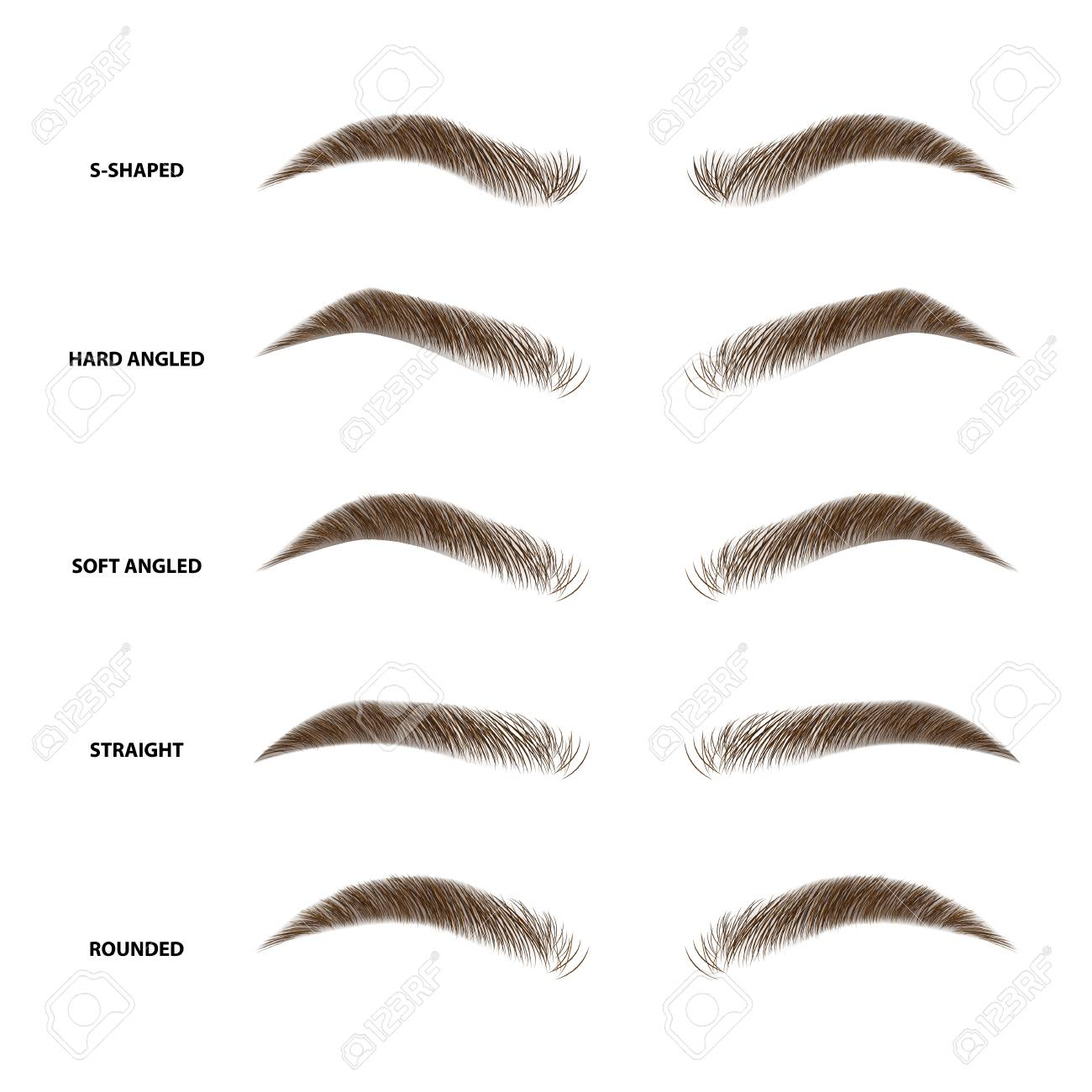 Types of eyebrows vector illustration - 100924434