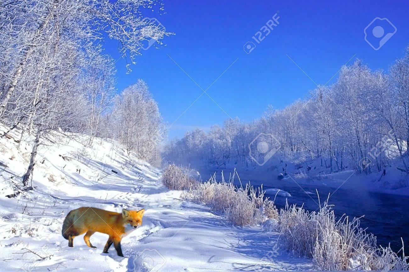 red fox in winter - 863754