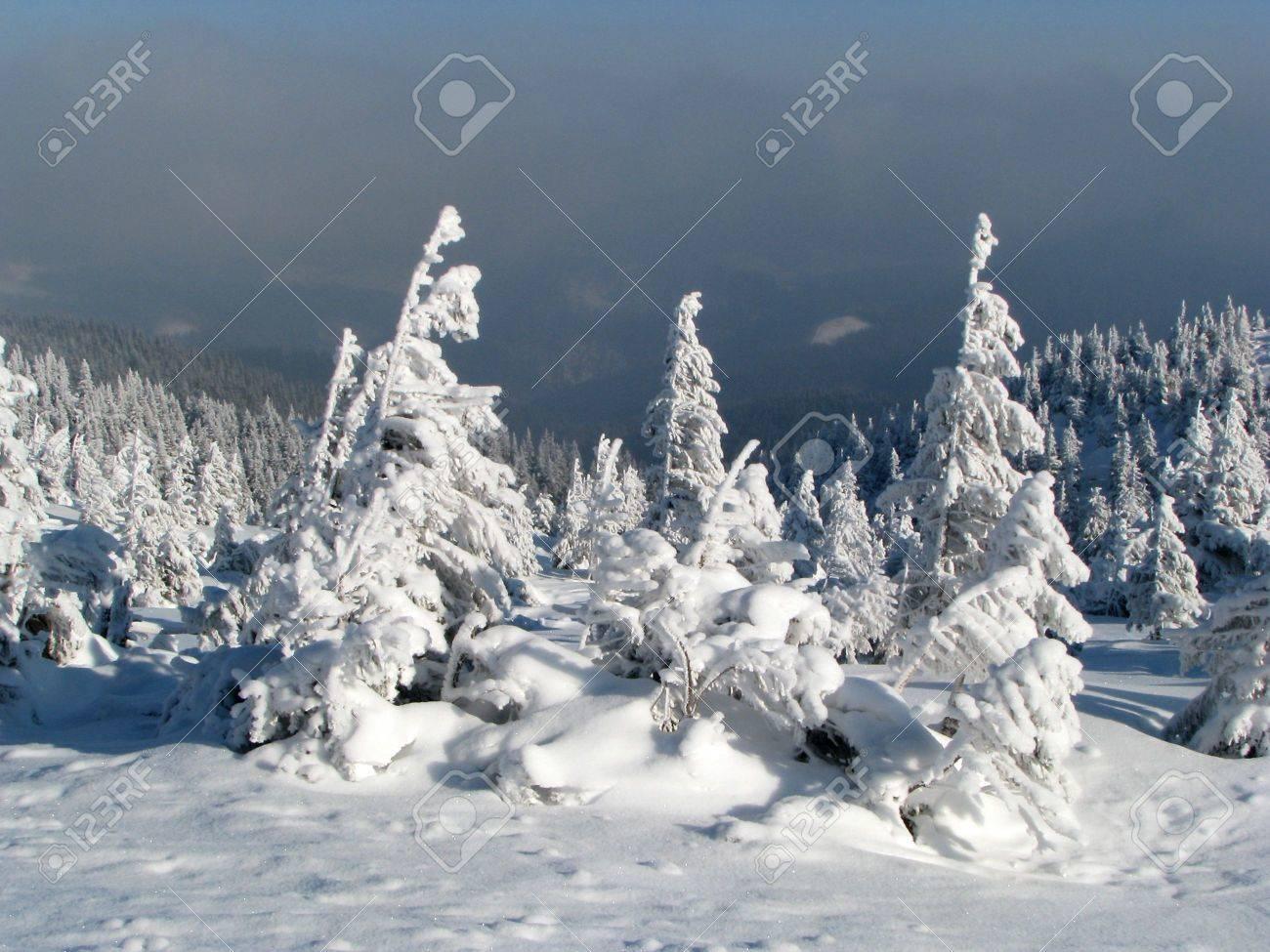 Snowbound firs. Winter landscape. Snowbound forest in the mounts. Stock Photo - 6111231