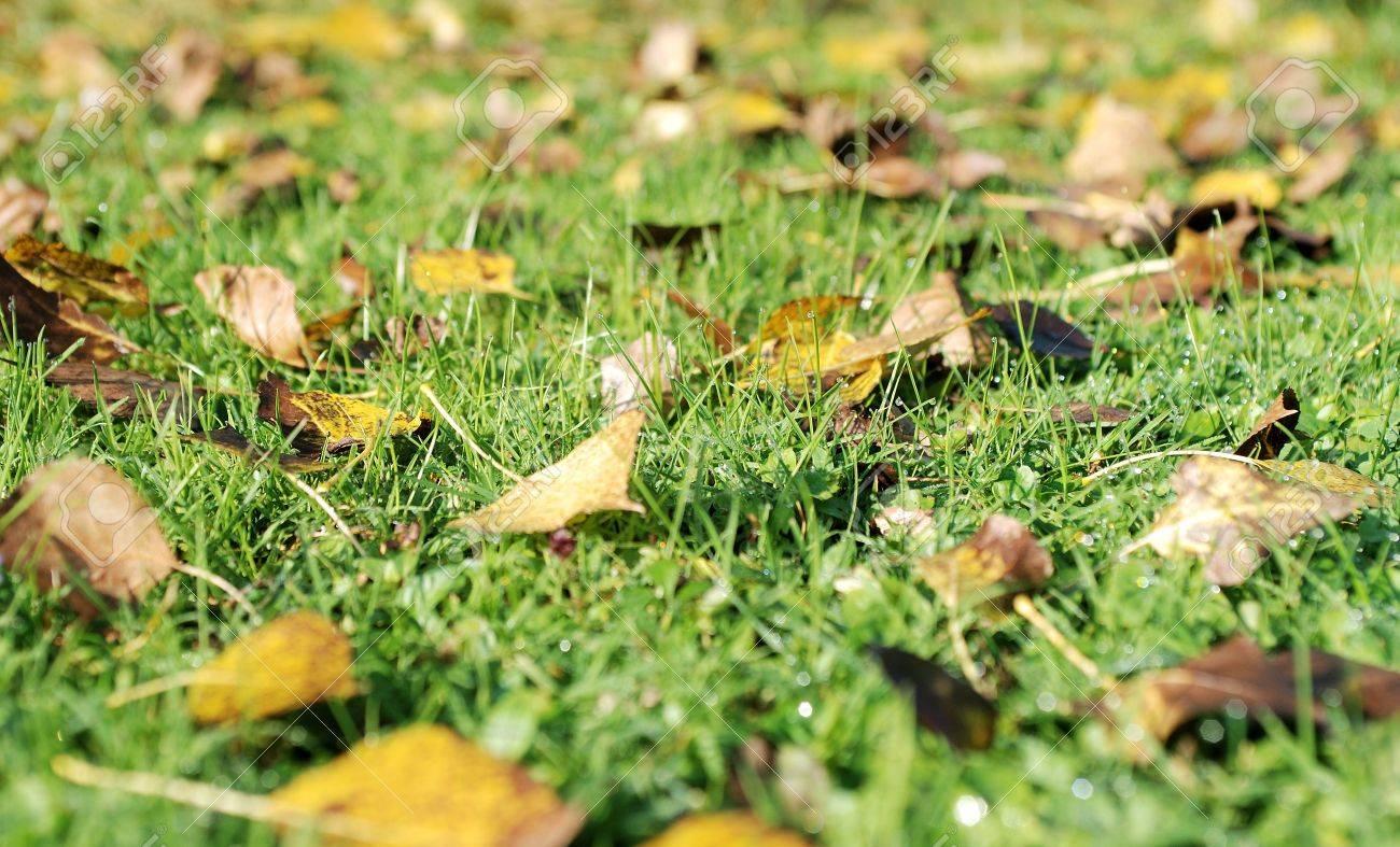 Autumnal background Stock Photo - 3697845