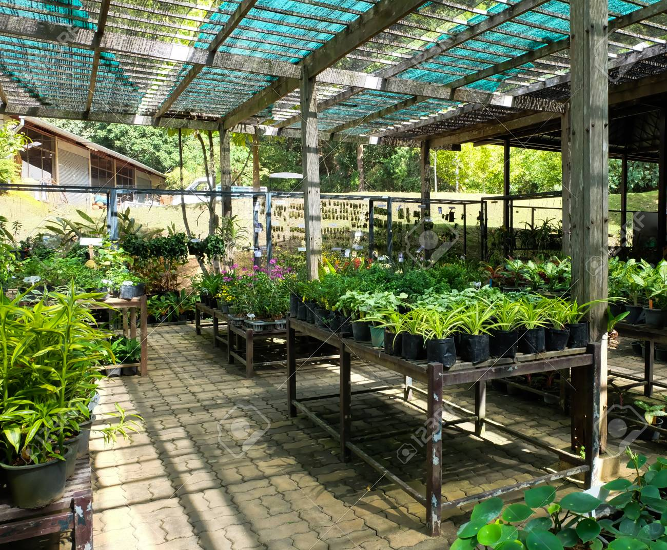 Wondrous Plant In Greenhouse In Summer Home Interior And Landscaping Dextoversignezvosmurscom
