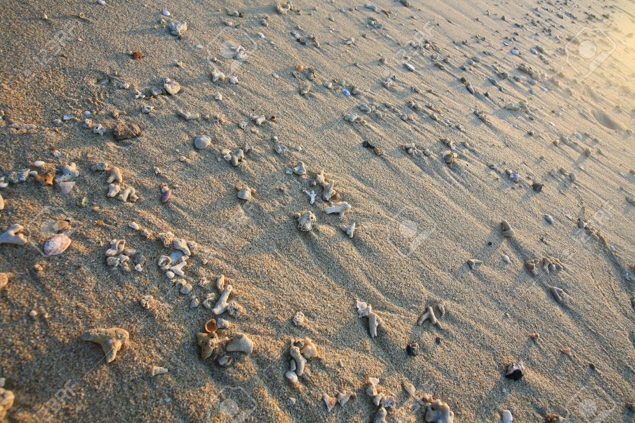 Shells and coral reef fossil on Andaman sea coast suitable as