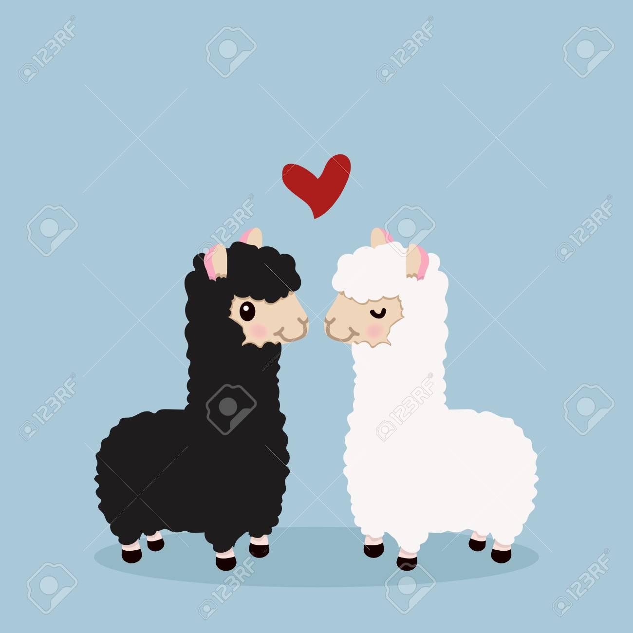 Alpaca couple in love - 91669599