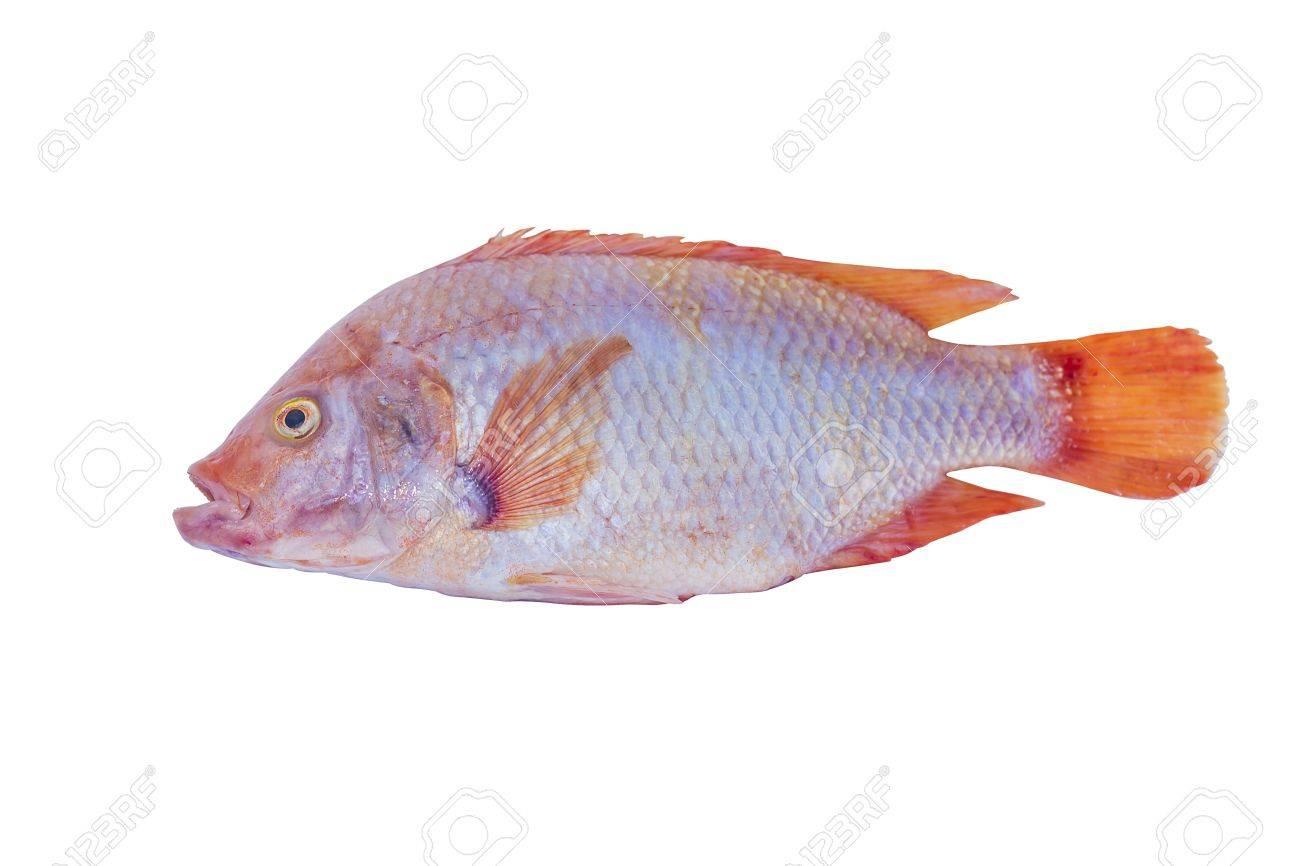 fresh mango fish isolated on white background Stock Photo - 17683843