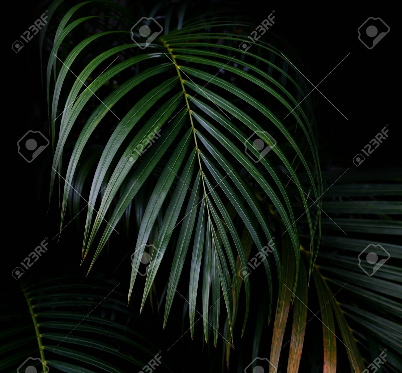 green leaves pattern leaf palm tree in the forest ロイヤリティー