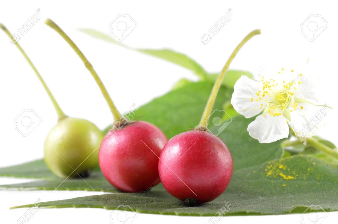 Jamaican Cherry, Muntingia Calabura, Family Muntingiaceae, Central ...