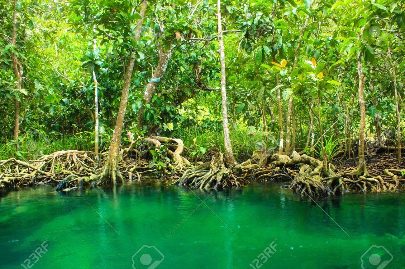 Khlong Song Nam clear tropical stream,krabi,thailand Stock Photo - 19600850