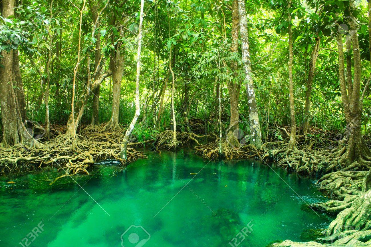 Khlong Song Nam clear tropical stream,krabi,thailand Stock Photo - 19600854