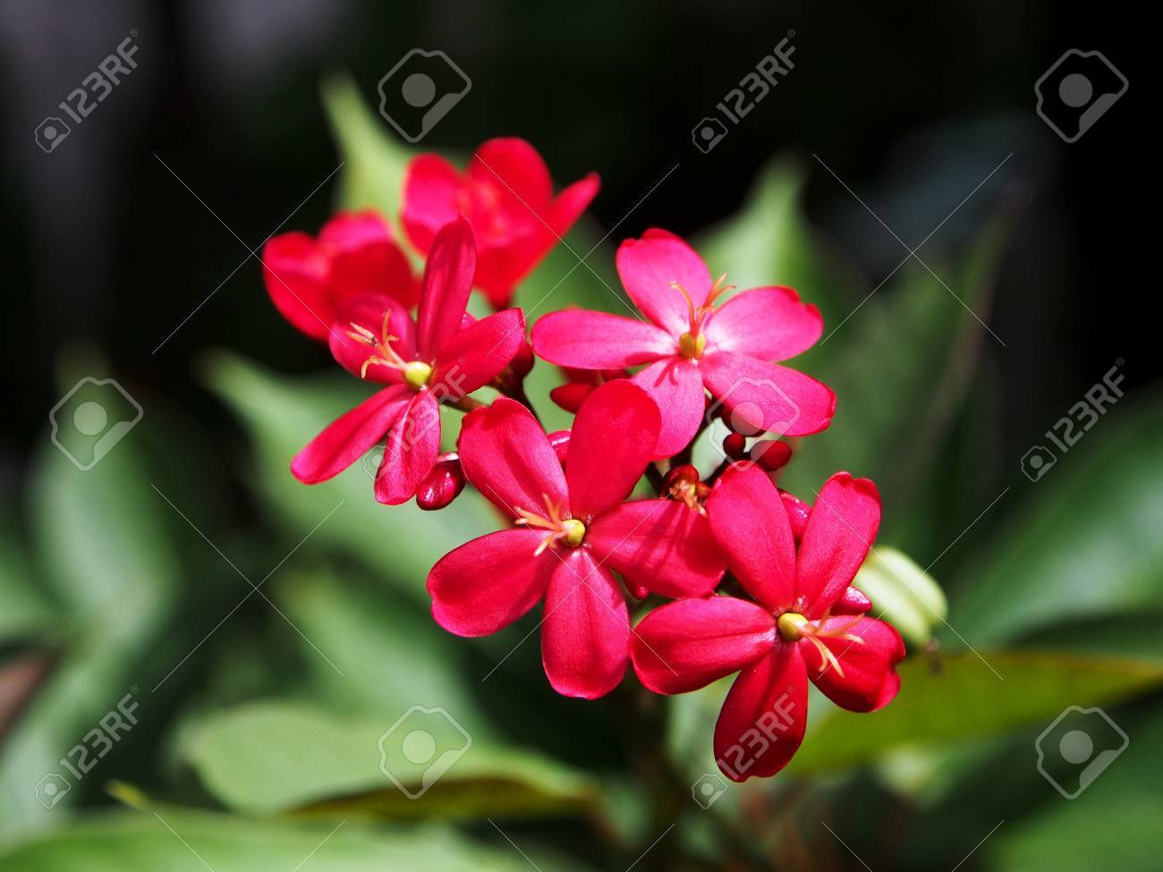 Deep pink flowers stock photo picture and royalty free image image deep pink flowers stock photo 37670390 mightylinksfo Image collections