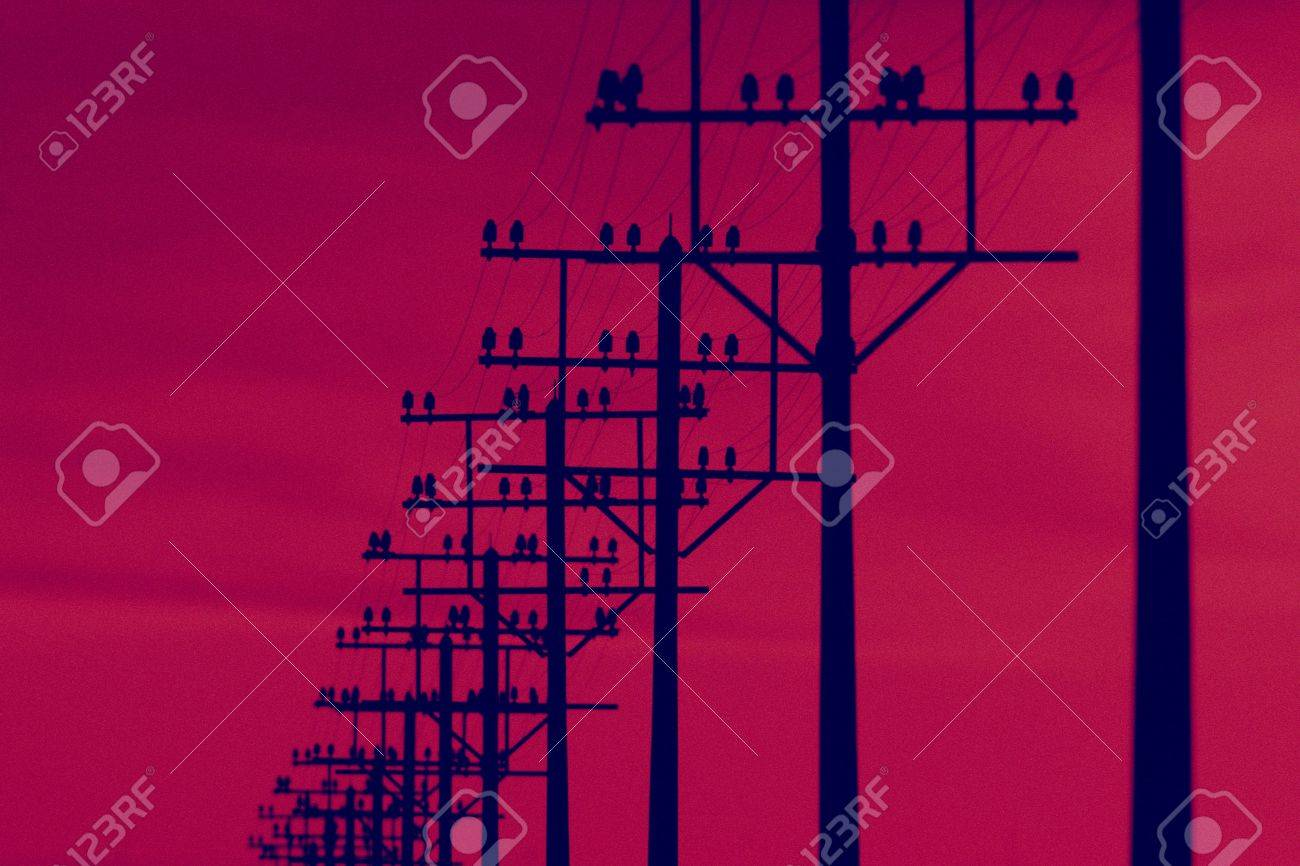 Magnificent Telegraph Poles And Telegraph Wires At Sunrise Stock Photo Picture Wiring 101 Relewellnesstrialsorg