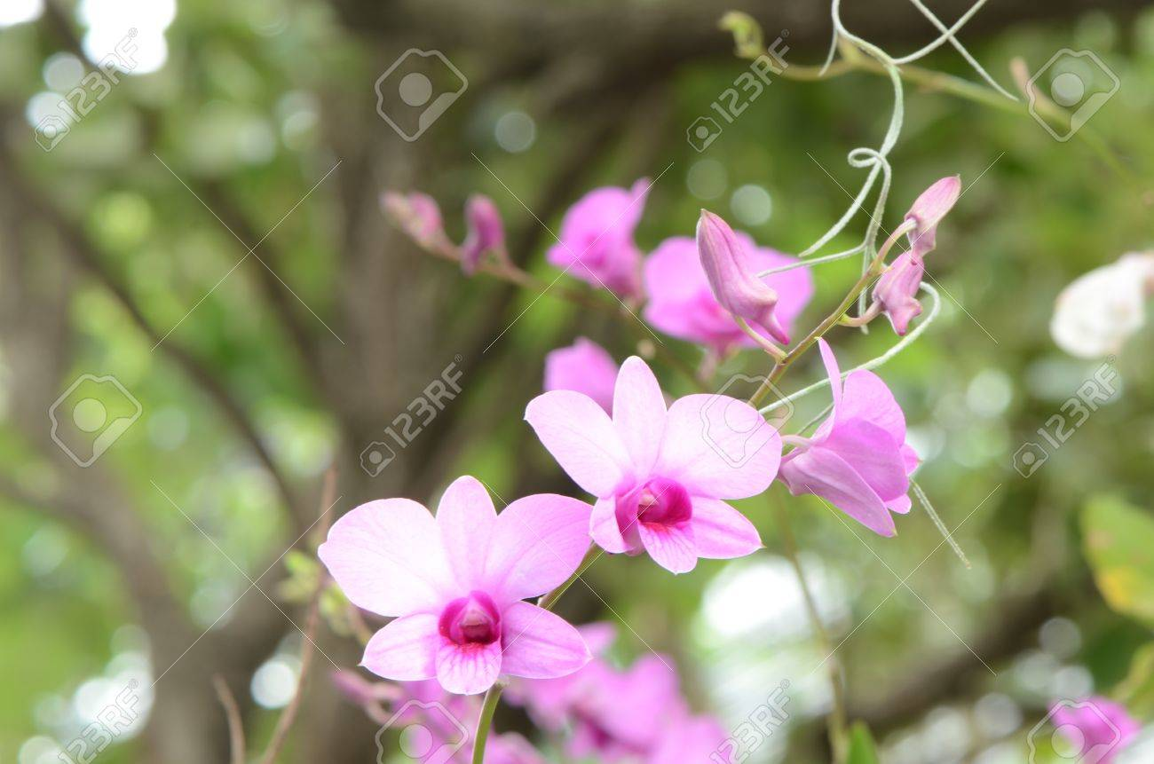 Most Popular Flowers orchids are monocotyledon orchidaceae family is the most popular