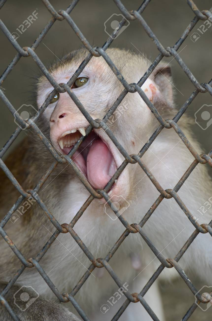 In The Monkey Cage At The Zoo Stock Photo, Picture And Royalty Free ...