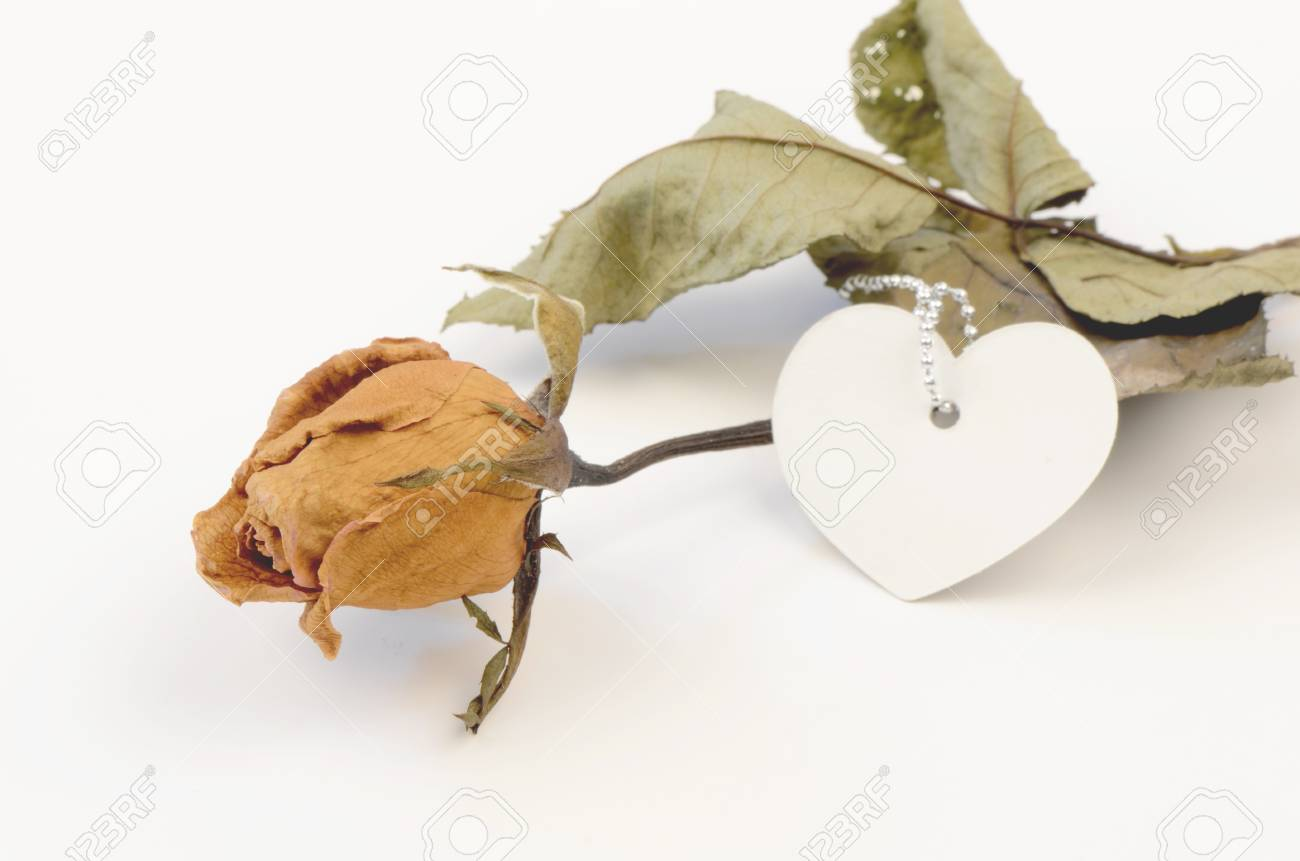 Dried roses Stock Photo - 14889019
