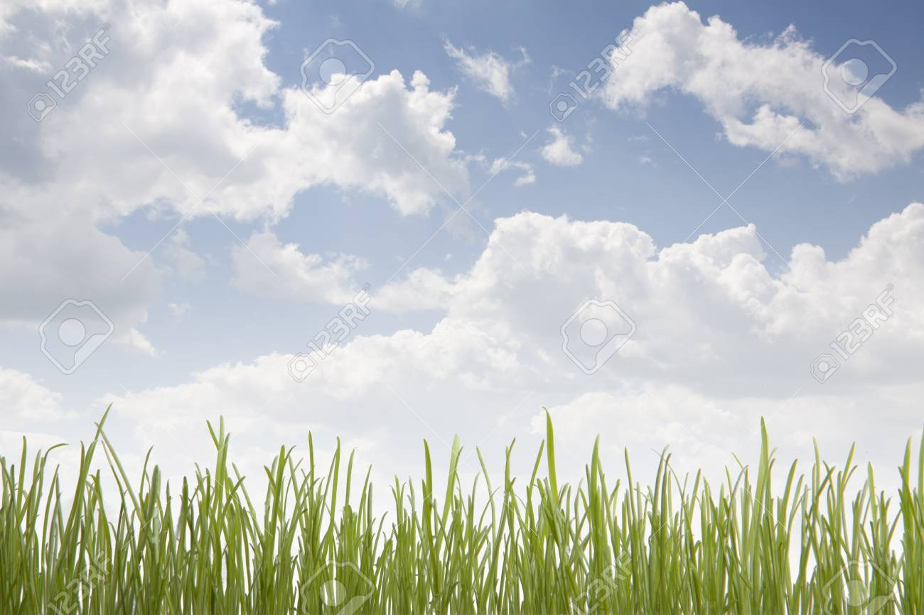 green grass and blue sky Stock Photo - 14434520