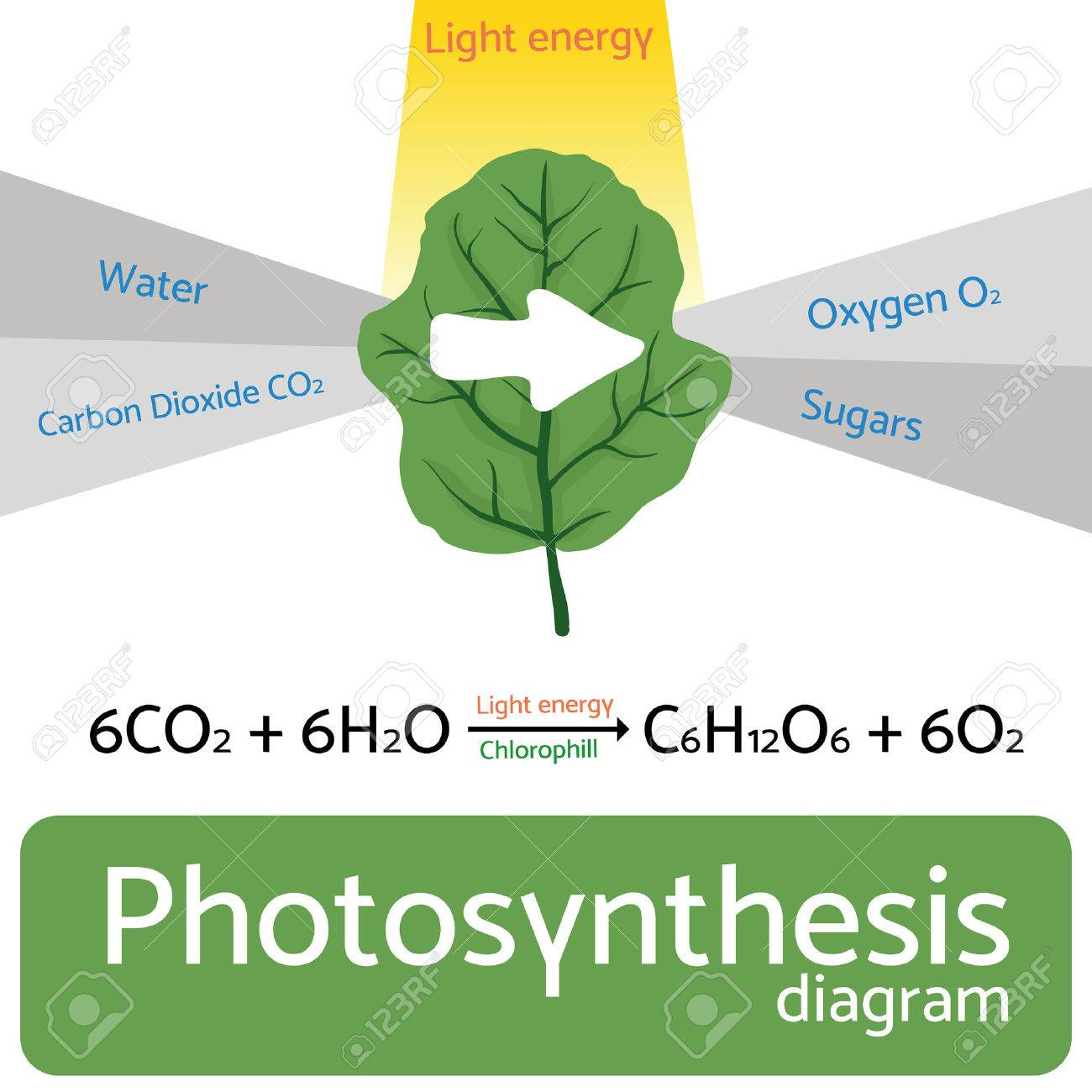 Photosynthesis diagram schematic illustration of the photosynthesis photosynthesis diagram schematic illustration of the photosynthesis process stock vector 56913066 ccuart Images